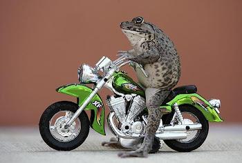 A la moto no le puse pegatinas...pero me hubiera gustado.
