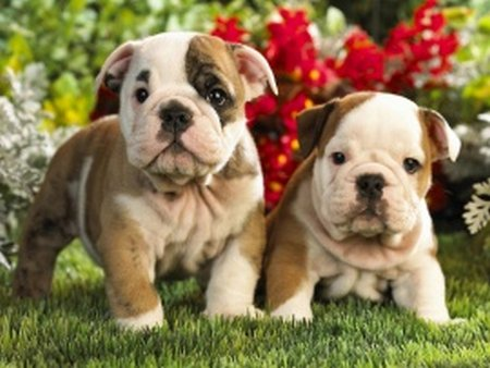 pictures of puppies