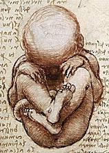 Embrionandonos