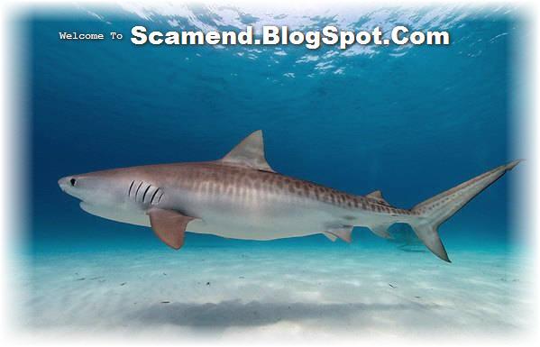 [shark+scam.jpg]
