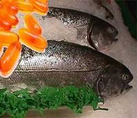 Minyak Ikan