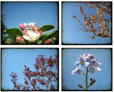 poloroids, ttv, through the viewfinder, photos, photographs, nature, plants, blossom, trees, leaves, flowers, artistic, surf jewels, fruit
