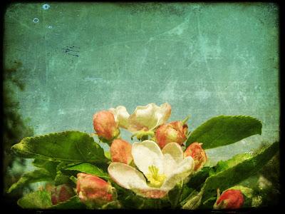 flower, vintage, photograph, picture, poloroid, ttv