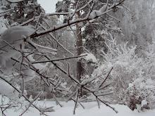 Flera vinterbilder från Horn.