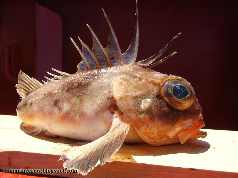 почему yt клюет рыба в пруду