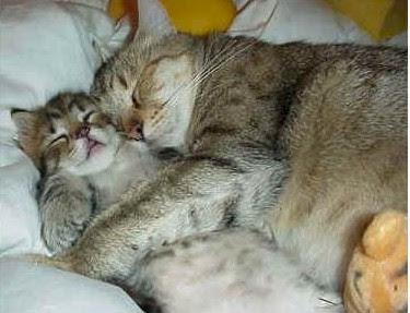 snuggle