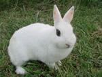 Producción y comercialización de carne de conejo