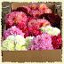 Organic Flower Power