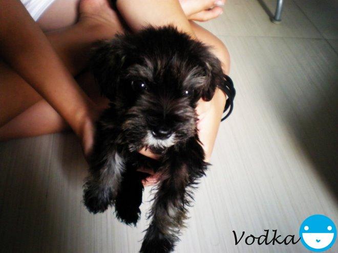 ♥Vodka