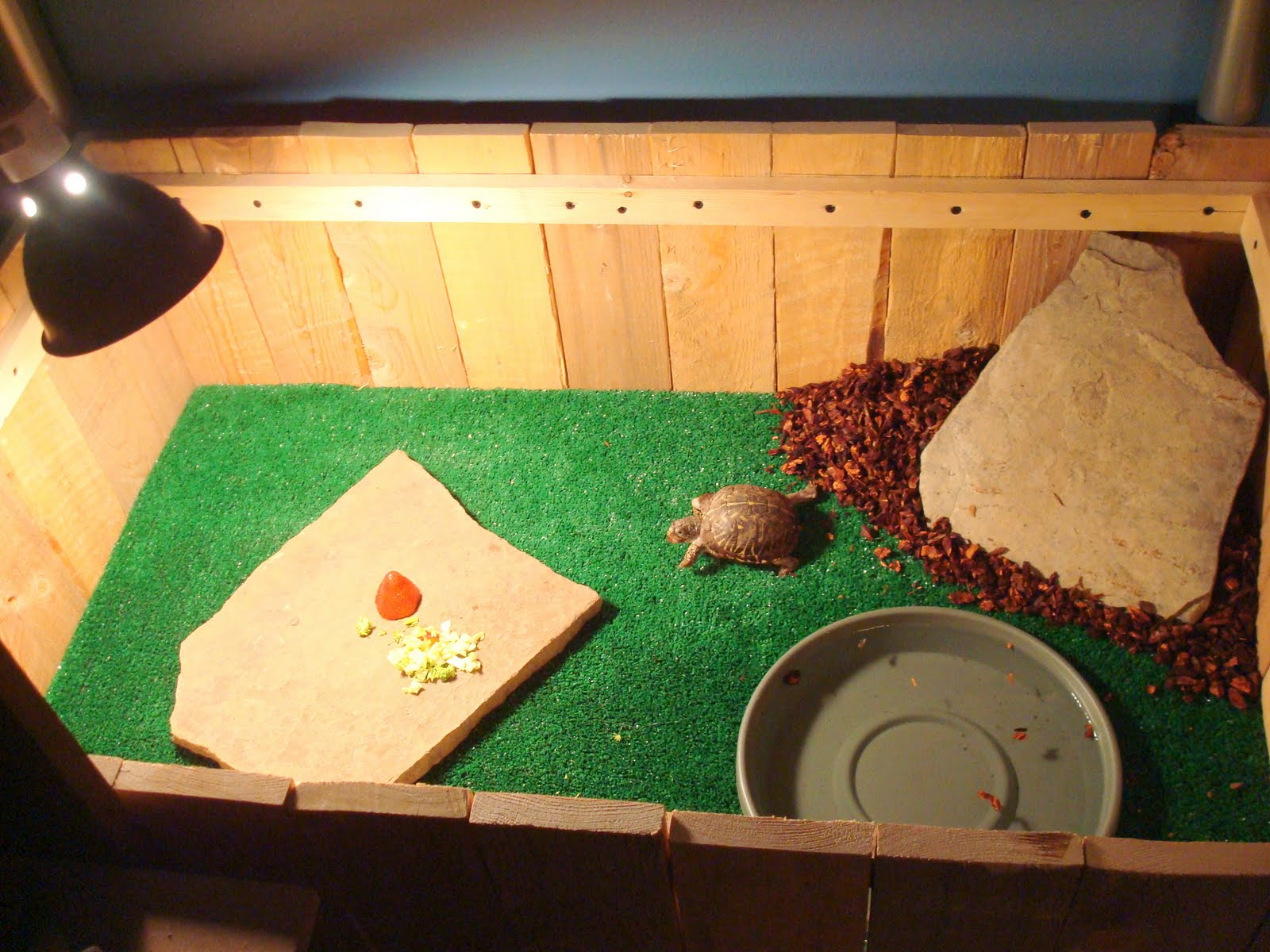 Indoor Box Turtle Habitat title=