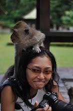 At Alas Kedaton - Bali