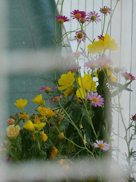 Como cuidar mis plantas cuidar de tus plantas es for Como cuidar las plantas