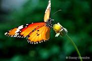 Belajar dari kupu-kupu....