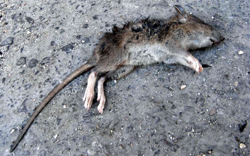 Literatura e historia mas all de las palabras - Cazar ratones en casa ...