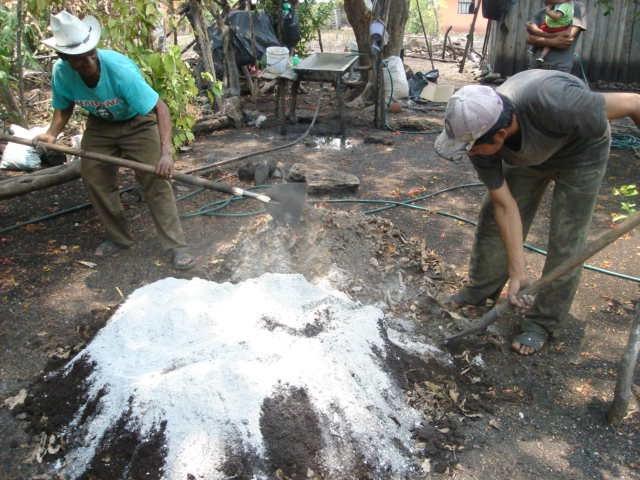 Produccion de arboles forestales el sustrato for Mantillo o sustrato