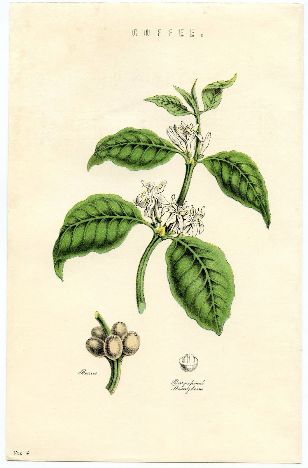 Tea Leaf Paint Color
