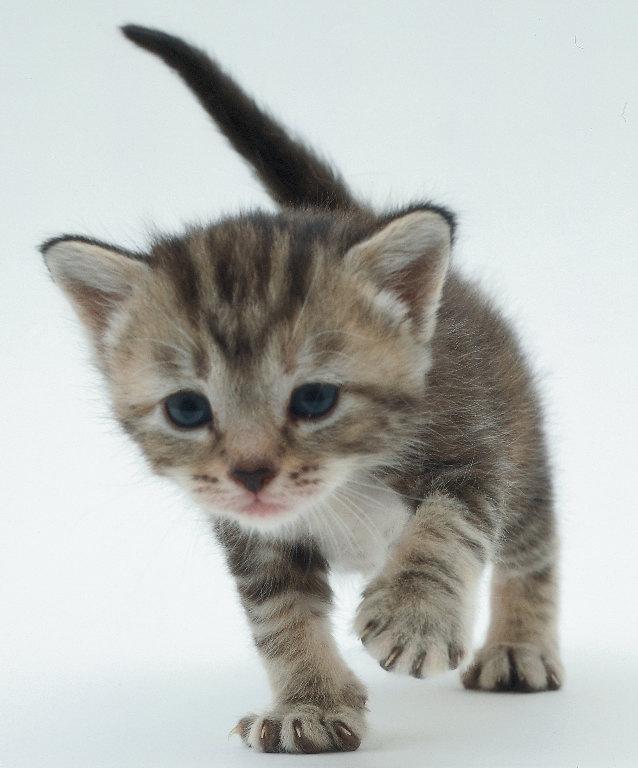 gambar kucing - gambar kartun kucing