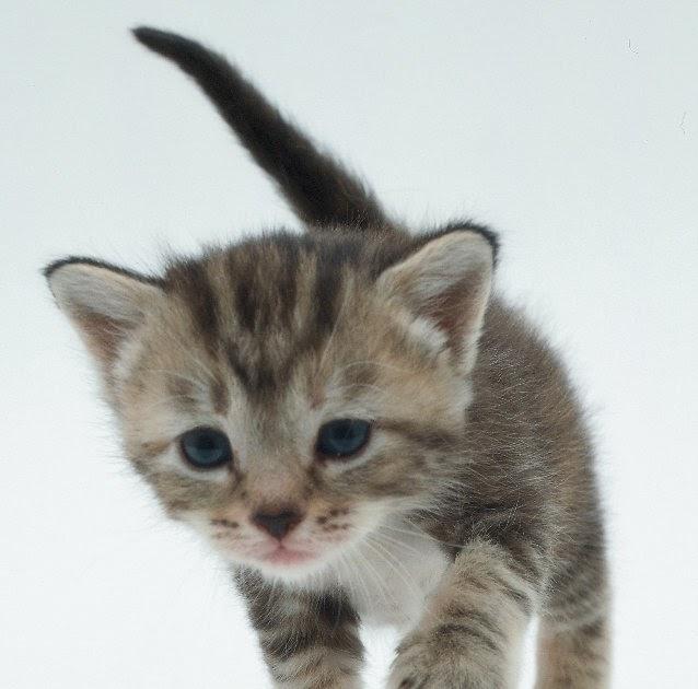 Gambar Kucing Foto godean.web.id