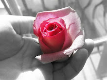 As rosas falam...