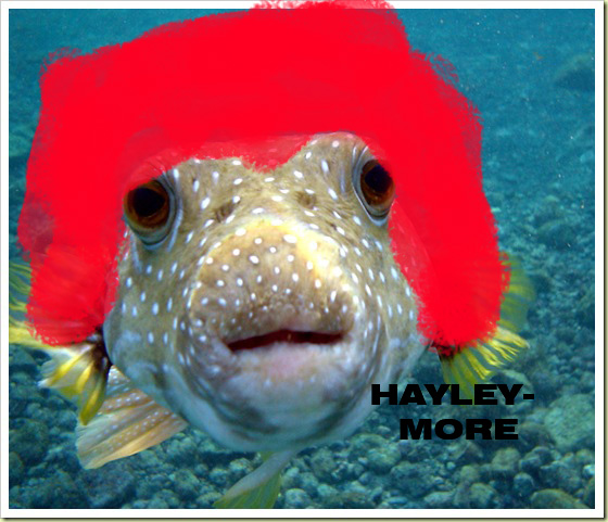 Distinctively me paramore more like hayley more for How much is a puffer fish