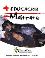 Mas Educación