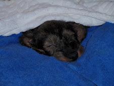 Nukkumatti, nukkumatti lasten illoin kulkee heittää uni hiekkaa...