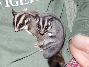 Sylvester & Poptart