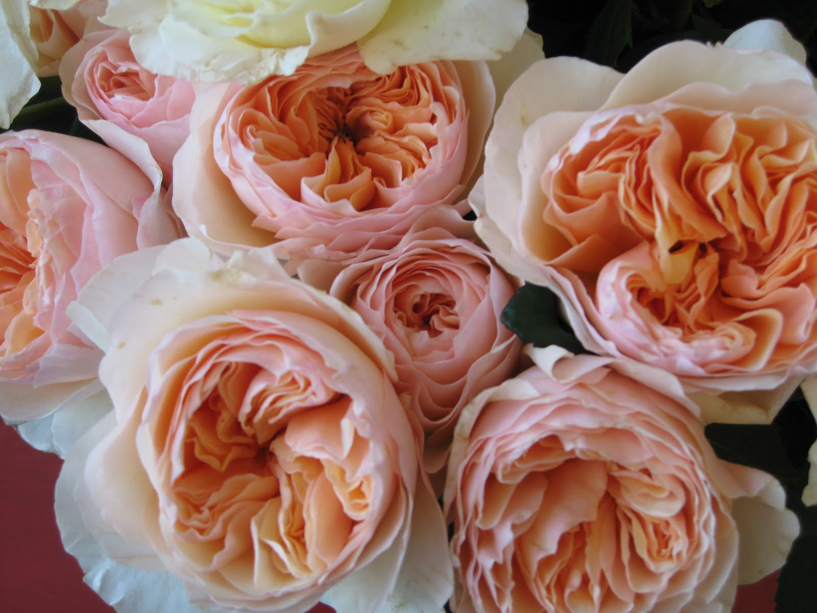 Down to Earth Flowers Gifts Garden Roses