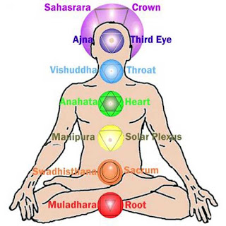 The chakras in the human subtle body