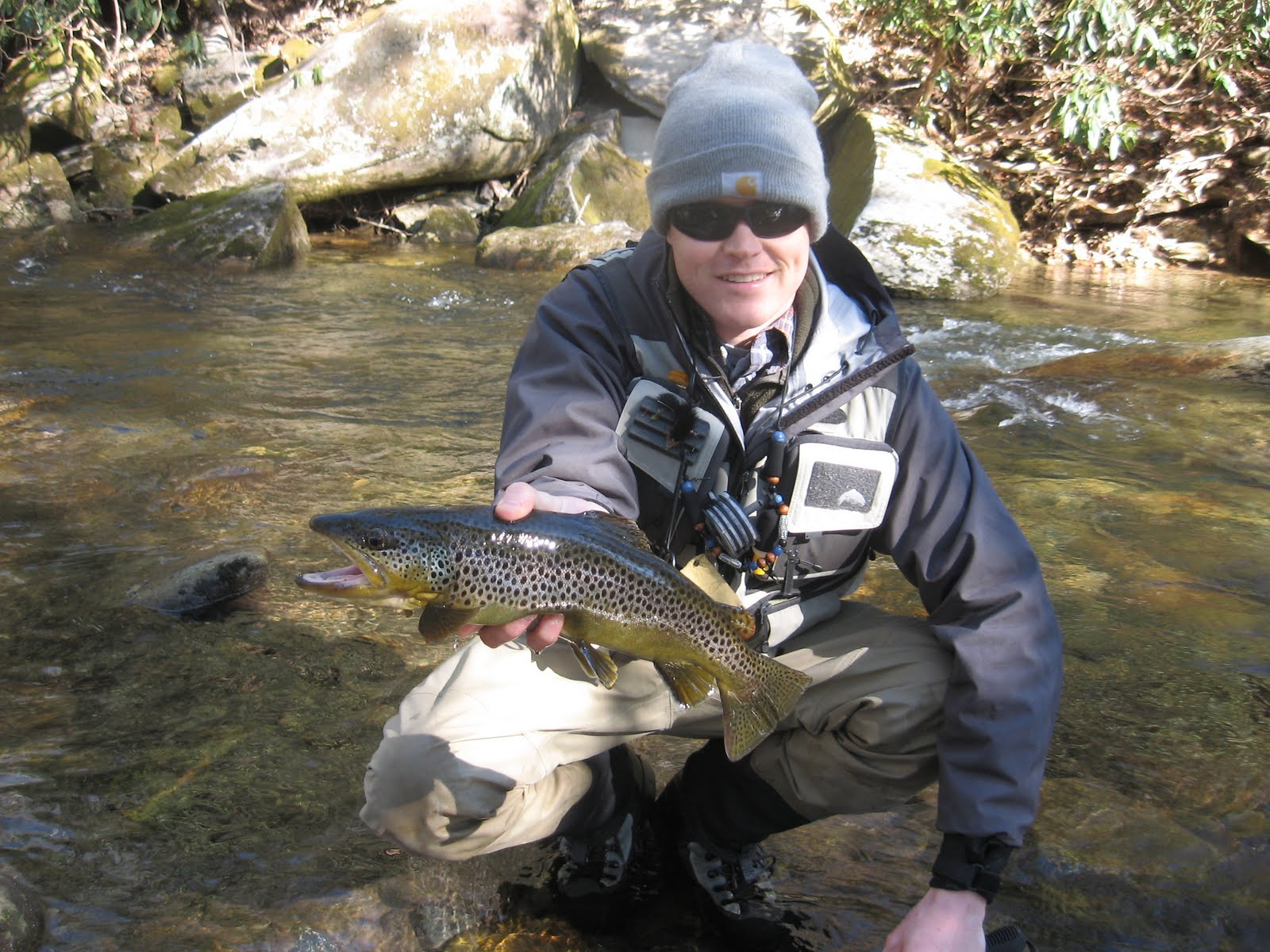 Brown trout fly fishing davidson river 3 26 for Davidson river fly fishing