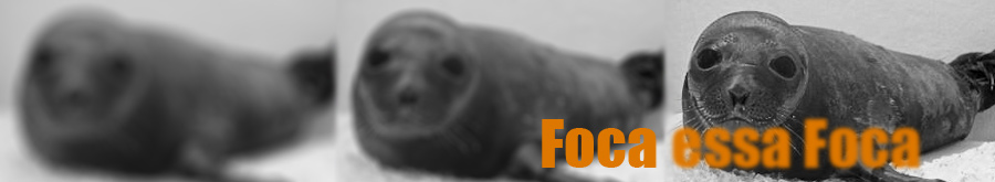 Dicas de Fotografia - Foca essa Foca