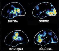 Beynin Bölümleri, Konuşma, Duyma, Görme, Düşünme