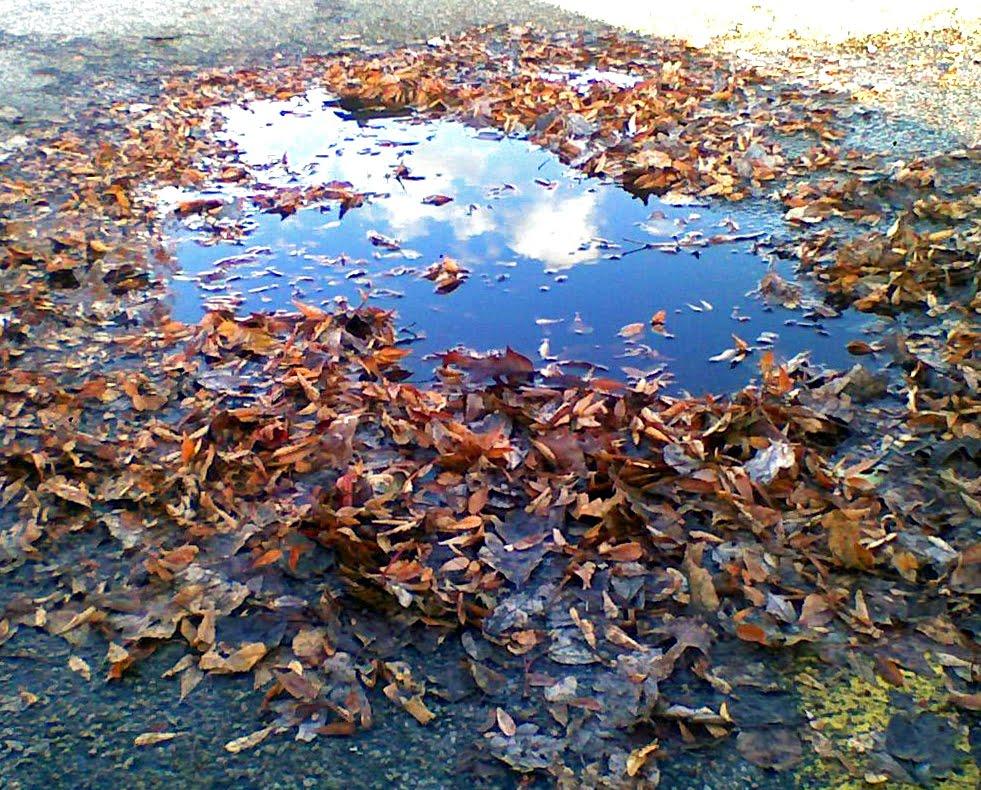 [ronald.nause.leavesandpuddle.2008.jpg]