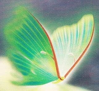 Trebol de cuatro hojas la mariposa esmeralda Mas alfombrar