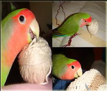 Nino, meu filhote