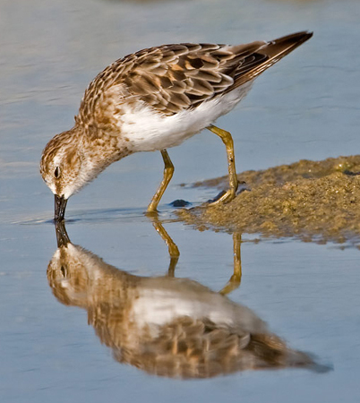 sandpiper elizabeth bishop That's why sandpipers seem so frantic when you see them at the beach their  food keeps  sandpiper by elizabeth bishop info shopping.
