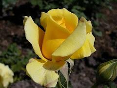 """""""La gloria de mi Padre está en que deis mucho fruto, y seáis mis discípulos"""". Juan 15, 8"""