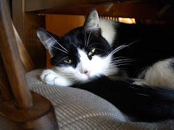 Catboy 1995-2010