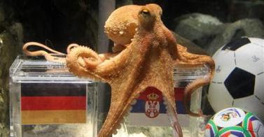 World Cup 2010 - Paul the Octopus dies