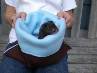 small pet pouch