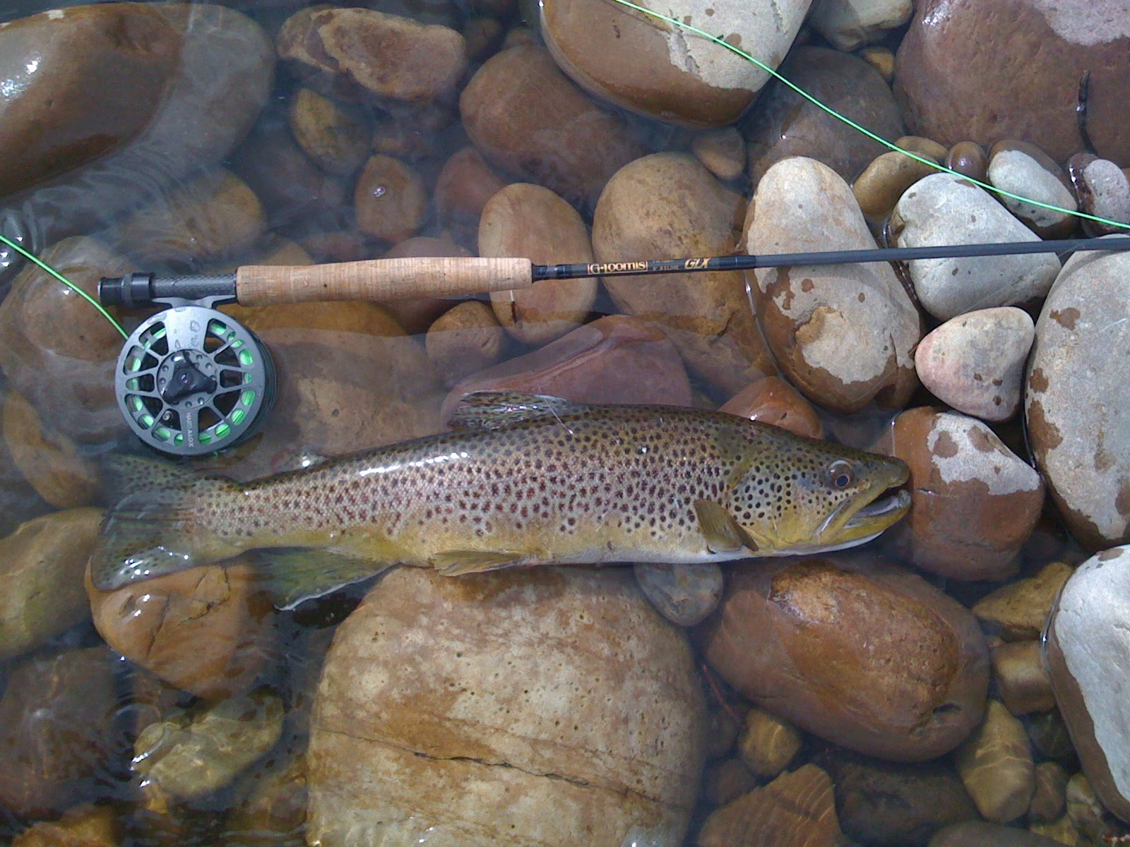 fishing trout: