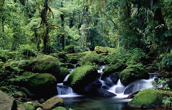 Bosques Humedos Tropicales Bosque Humedos Tropicales