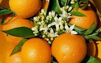 papel de parede varias laranjas