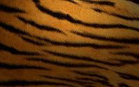 papel de parede pele de tigre