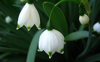 papel de parede flores brancas