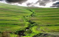 wallpaper paisagem verde