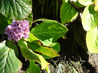 Libreta bot nica edad de algunas plantas ornamentales for Algunas plantas ornamentales