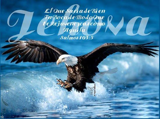 ... podrás ver . estaras renovado como las águilas : Blogs Cristianos