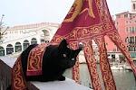 Cleopatra - Venetian Cat D.O.C.