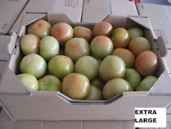 Holland Tomatoes 7kgs